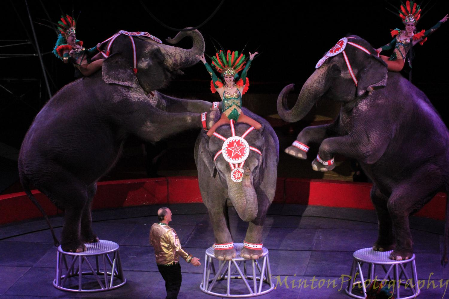 And that's all folks! The show is wrapped up with elephants and performers final segment.