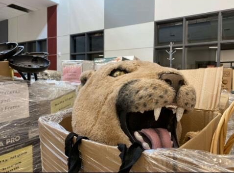 Mountain Lions! A lion head sits in a room of the the new B building. Teachers and staff have been moving all the supplies and decorations into the new building before in person school starts back up.