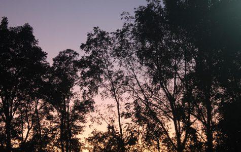 I Simply Love: Nature