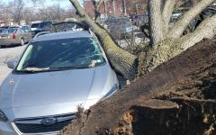 Oh no. The fallen tree lays on senior Alex Thaler's car. The driver's side of Thaler's car received the most damage.