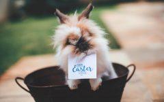 Kline hosts Easter egg hunt for students
